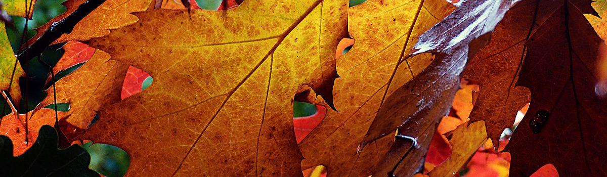 Geschichtenwettbewerb Herbststurm